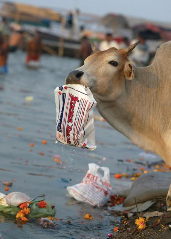 환경오염으로 고통받는 동물들